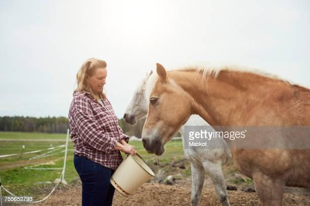 female farmer feeding horse on field - paard paardachtigen stockfoto's en -beelden