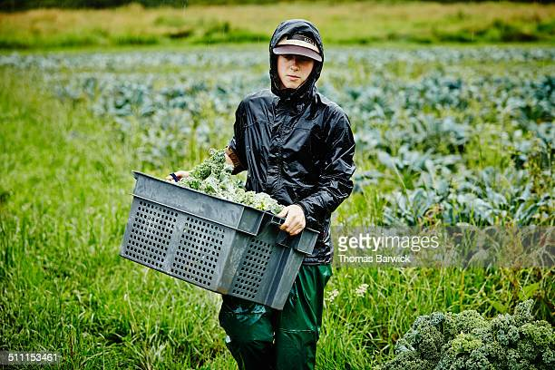 Female farmer harvesting kale carrying bin