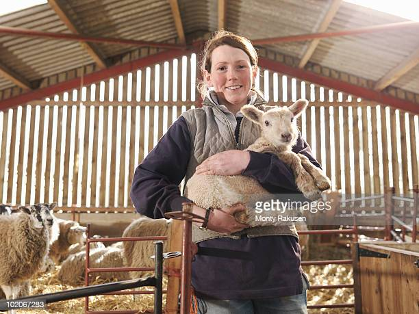 female farmer holding lamb - young animal stock pictures, royalty-free photos & images