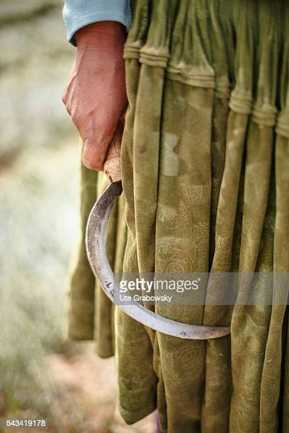 A female farmer holds a sickle in her hand on April 15 2016 in Sacaca Bolivia