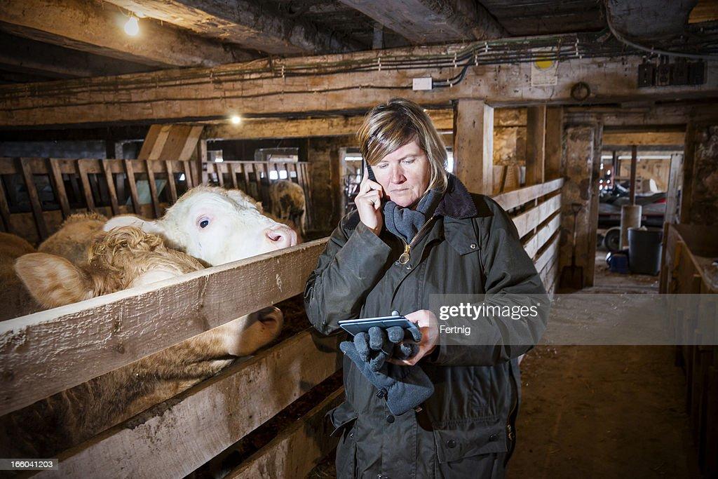 Weibliche farmer in einer Scheune mit smartphone und tablet : Stock-Foto