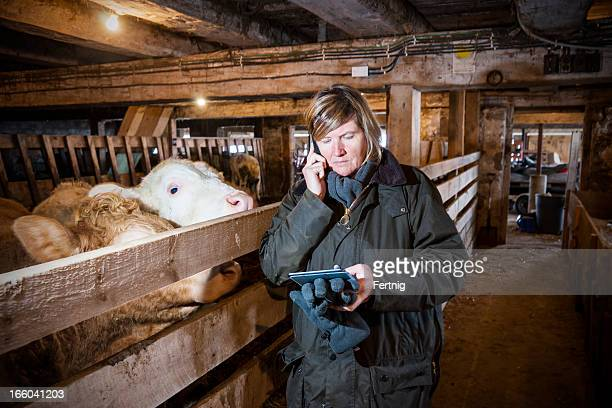 Female farmer in a barn using smartphone and tablet