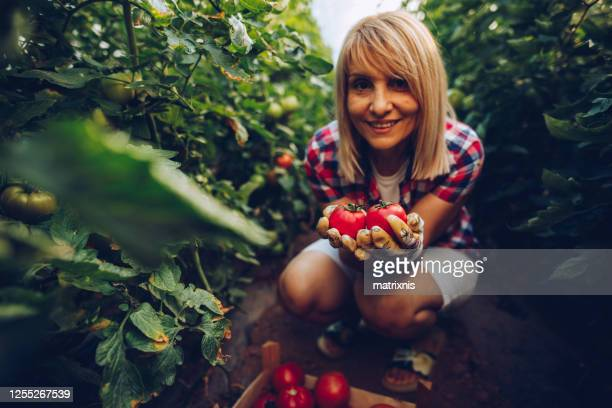 female farmer in her greenhouse - matrixnis stock pictures, royalty-free photos & images
