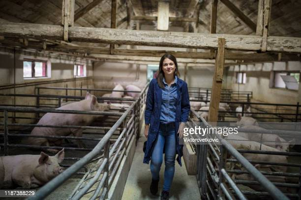 female farmer in pig farm - pig stock pictures, royalty-free photos & images