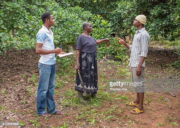 A female farmer is talking with her sons on their Cashew Farm on September 06 2016 in Congo Ghana
