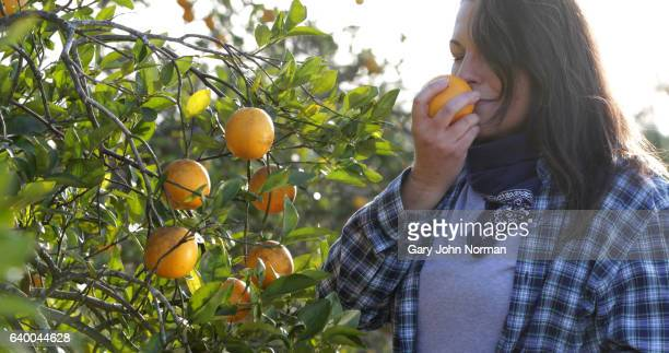 female farmer picking oranges in orchard - orange orchard stock pictures, royalty-free photos & images
