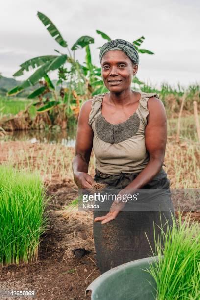 Weibliche Bäuerin pflanzt Reis in Afrika, Malawi