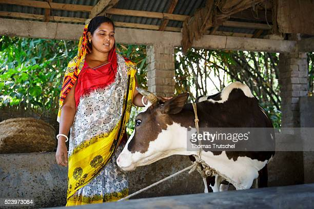 A female farmer stands beside a cow in the barn of a farm in a rural area in the southwest of Bangladesh on April 10 2016 in Betal Para Bangladesh
