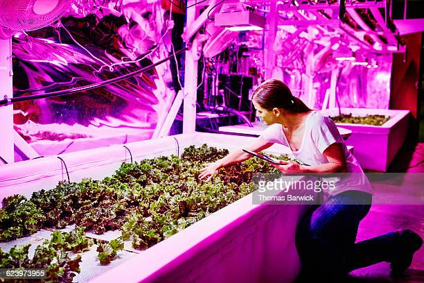 Female farmer taking notes in LED greenhouse