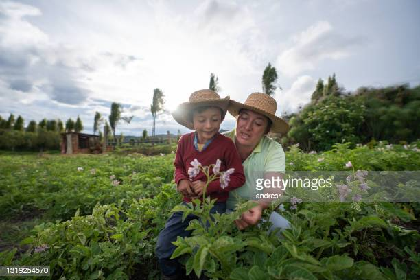 female farmer teaching her son about harvesting the land - colombia stock pictures, royalty-free photos & images