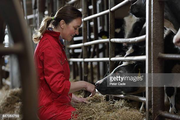 Female farmer with cows in barn