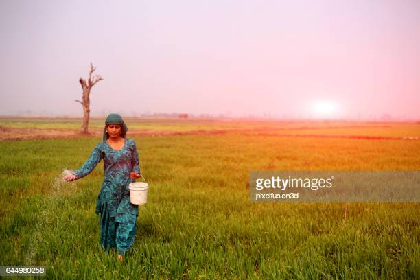 female farmer working in the field - haryana stock photos and pictures