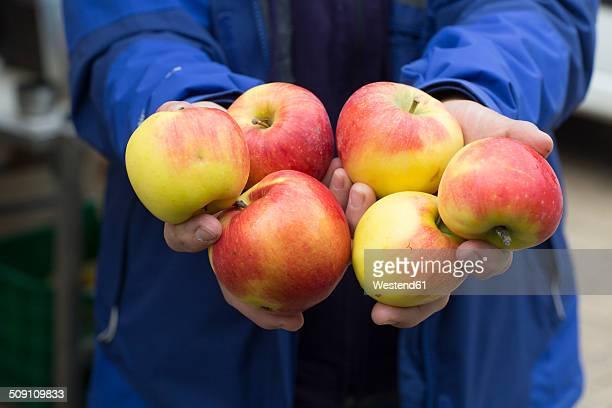 Female farmer's hands holding organic apples