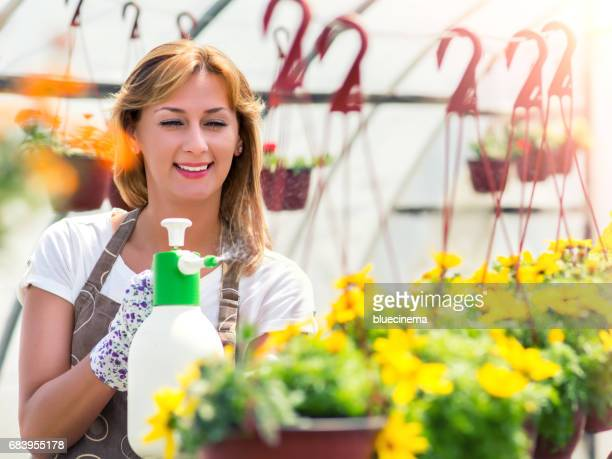 Female Florist Watering Flowers At Nursery Garden