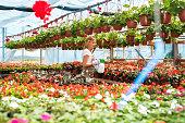 florist woman hands with sprayer spraying