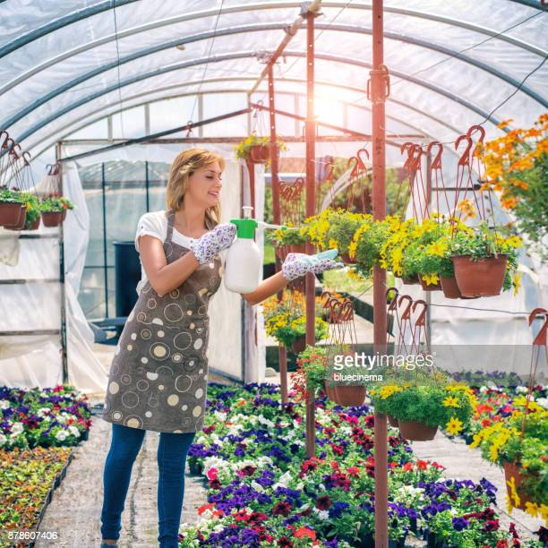 female florist watering flowers at nursery garden - orange grove stock photos and pictures