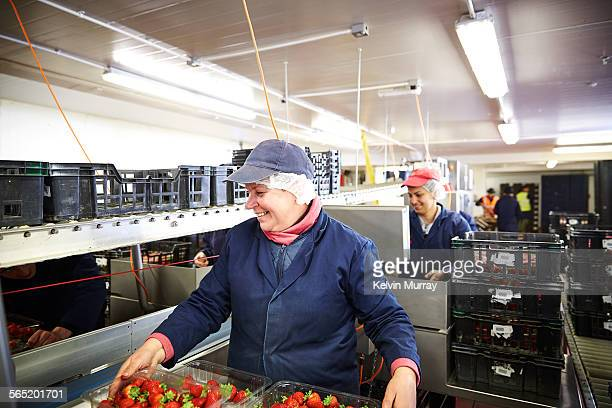 Female fruit packer smiles while sorting fruit