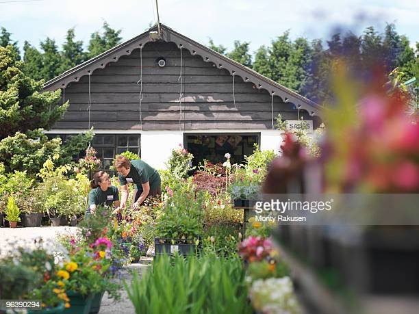 female garden center workers with plants - garden center stock pictures, royalty-free photos & images
