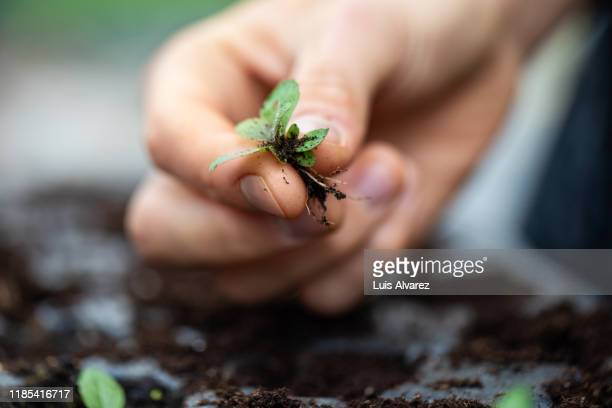 female garden worker holding sapling at greenhouse - sustainable lifestyle stock pictures, royalty-free photos & images