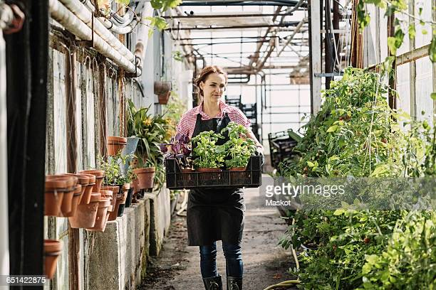 Female gardener carrying potted plants in greenhouse