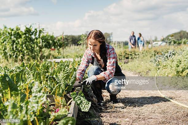 Female gardener crouching and planting on farm