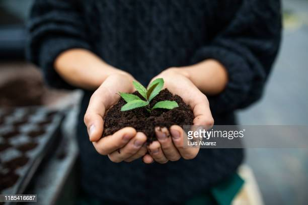 female gardener holding a sapling with soil - sustainability stock pictures, royalty-free photos & images