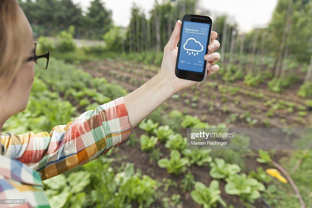 Female gardener holding weather app on smart phone : Stock Photo