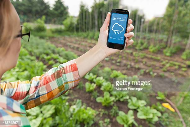 Female gardener holding weather app on smart phone