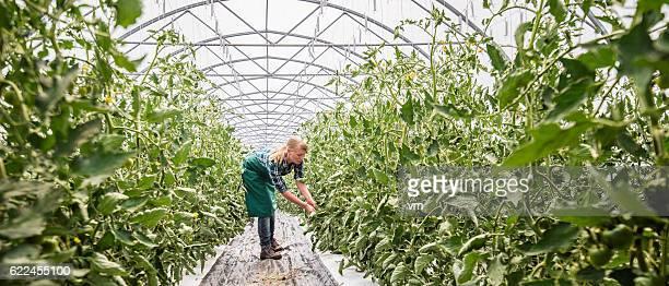 Female gardener in greenhouse