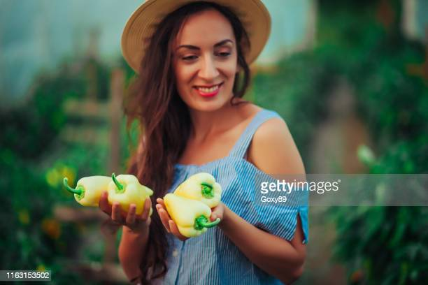 female gardener picking fresh organic - producer stock pictures, royalty-free photos & images