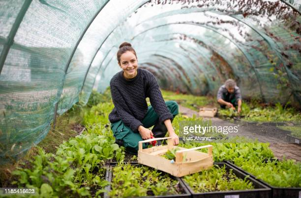 female gardener working in garden center - sustainability stock pictures, royalty-free photos & images