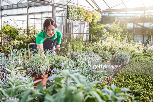 Female gardener working in greenhouse with tablet pc