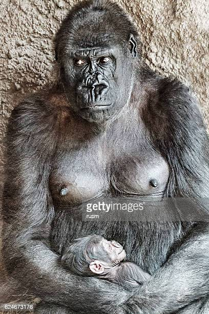Female gorilla with baby