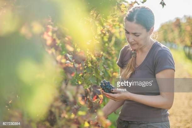 Female Grape Harvester