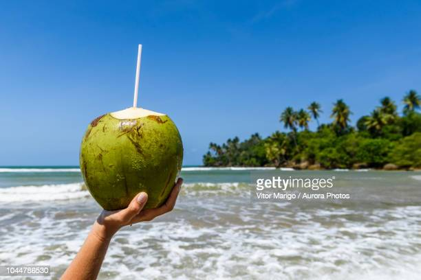 female hand holding coconut fruit for drinking against sea and tropical scenery, boipeba island, bahia, brazil - coconut water stock pictures, royalty-free photos & images