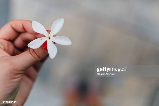 female hand holding jasmine flower, view from above, canary island, spain - jasmine stock photos and pictures