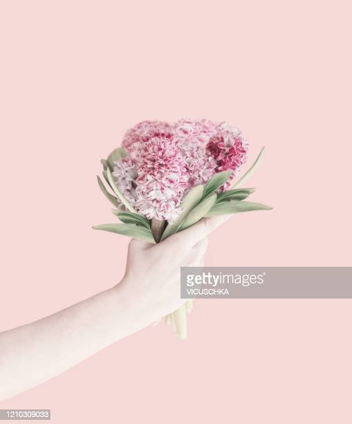 female hand holding pink hyacinths flowers bunch at pastel background - hyacinth stock pictures, royalty-free photos & images