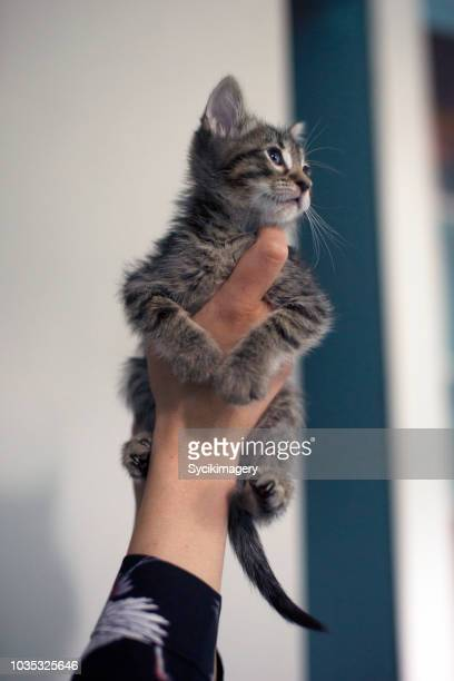female hand holding up kitten - one animal stock pictures, royalty-free photos & images
