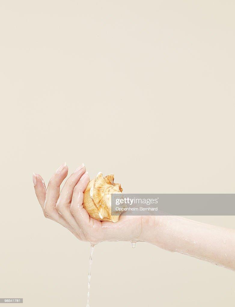 female hand holding wet hermit crab shell : Stock Photo
