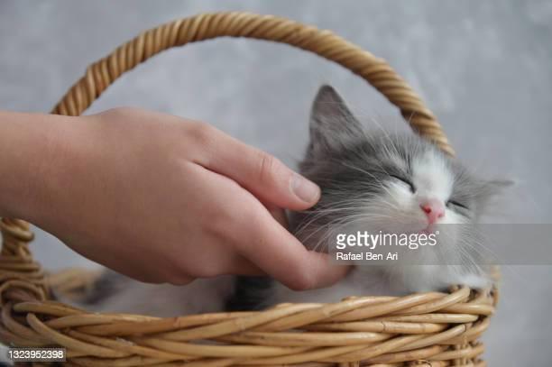 female hand patting a cute kitten - rafael ben ari - fotografias e filmes do acervo