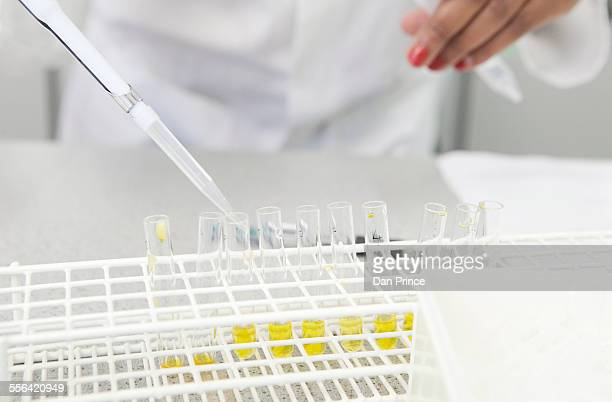 Female hand pipetting yellow liquid into test tubes in lab