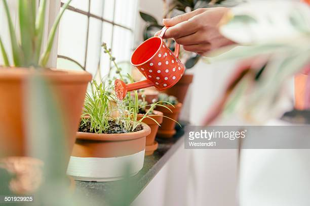 female hand watering plant on window sill with a tiny watering can - watering stock pictures, royalty-free photos & images