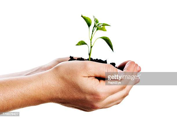 Female hands gently holding tiny seedling