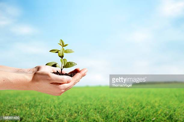 Female hands holding a sprout in rural scene
