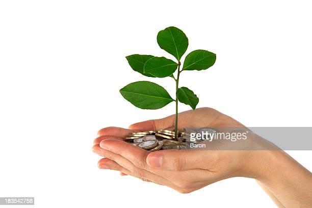 Weibliche Hände halten Münzen und kleine tree