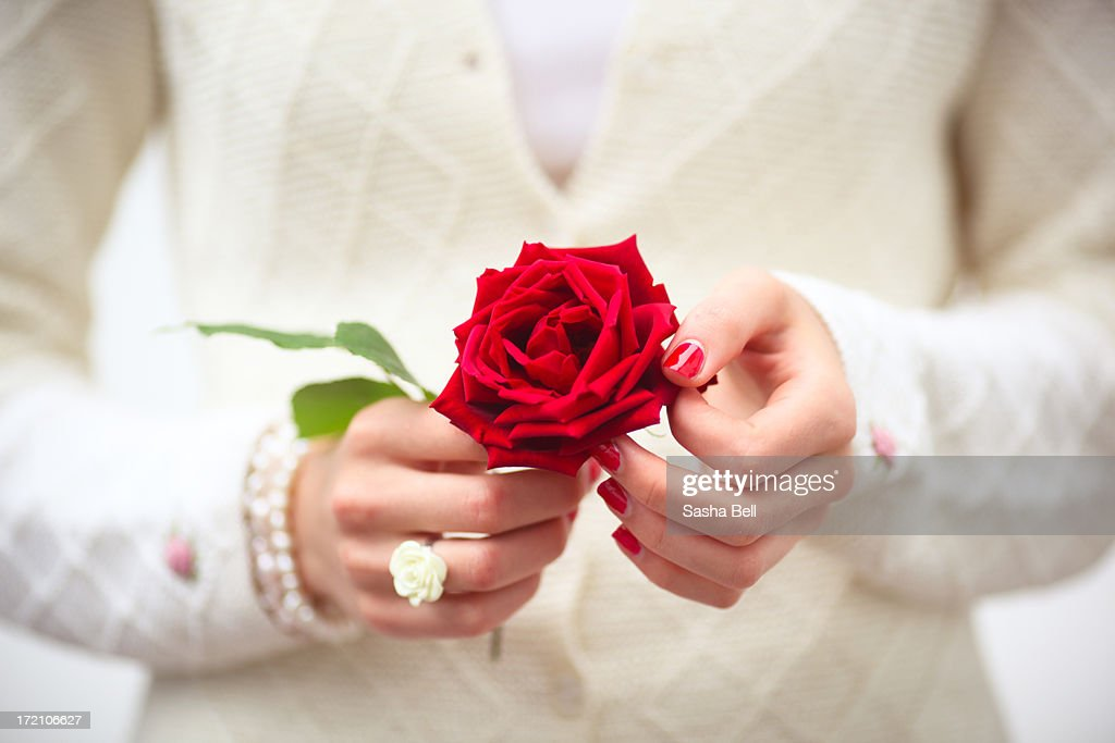 Female Hands Holding Red Rose. : Stock Photo