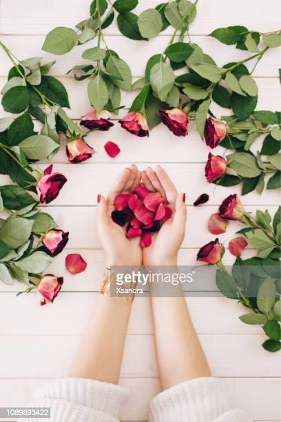 weibliche hände halten rose blumenblätter auf einem hölzernen hintergrund - rosenfarben stock-fotos und bilder