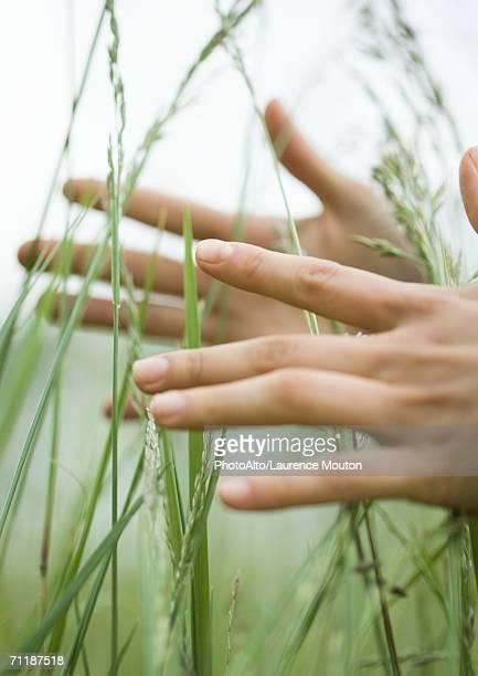 Female hands in long grass