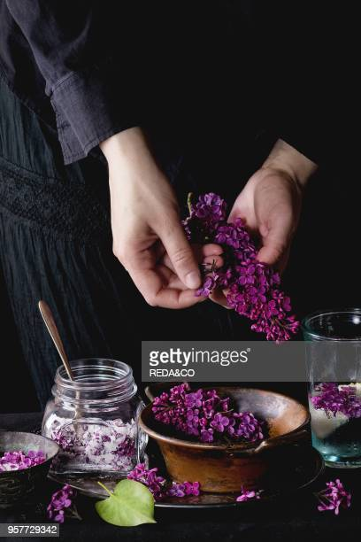 Female hands pluck lilac flowers from bunch to vintage copper bowl Glass jar of lilac flowers in sugar and glass of lilac water with lemon on black...
