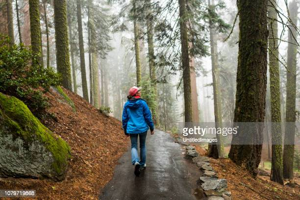 female hiker enjoying the fresh morning hike through a misty wet forest - mindfulness stock pictures, royalty-free photos & images